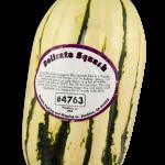 delicata-squash450